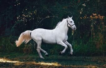 Hobune liigub kodu poole ikka kiiremini. Aga elektriauto?